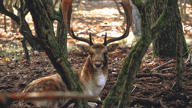 uselab-awd-amsterdamse-waterleidngduinen-hert-website.jpg